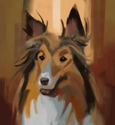Collie sketch