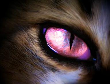 Registro de Photoplayer - Página 2 Animal_eye_by_cassie_noth-d3d4vym