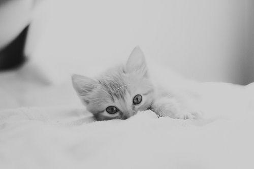 I love Kitties. by WhoWantsACookie