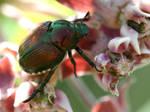 Milkweed Has The Best Bugs
