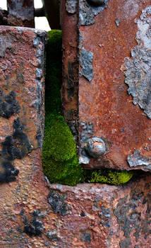 Moss on Metal