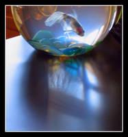 Goldfish by parrotdolphin