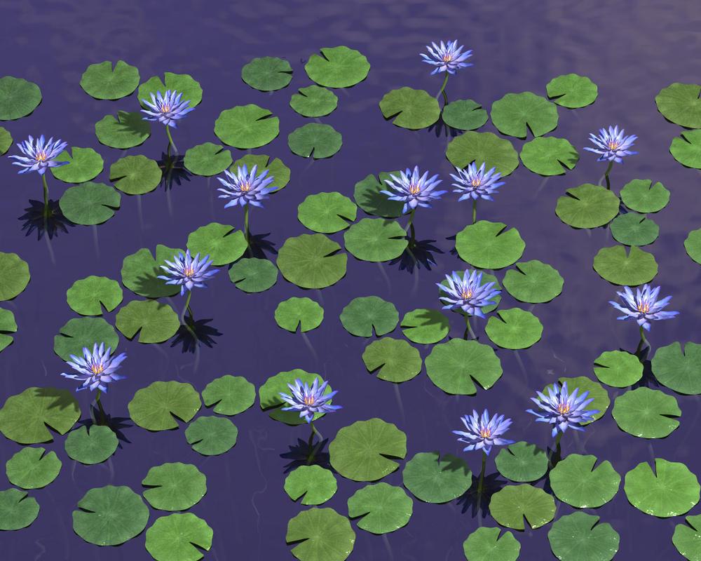 Blue Lotus Wp By Parrotdolphin On Deviantart