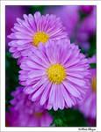 violet by raduborzea