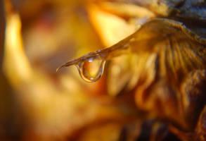 Pinapple Drop by Phenix59
