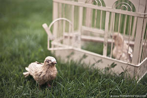 Birdcage by TomSimmonds