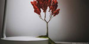 Tiny Trees Project 00001