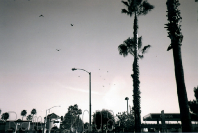 Birdsky by RAMILIVES