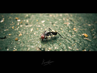The Giant Ant