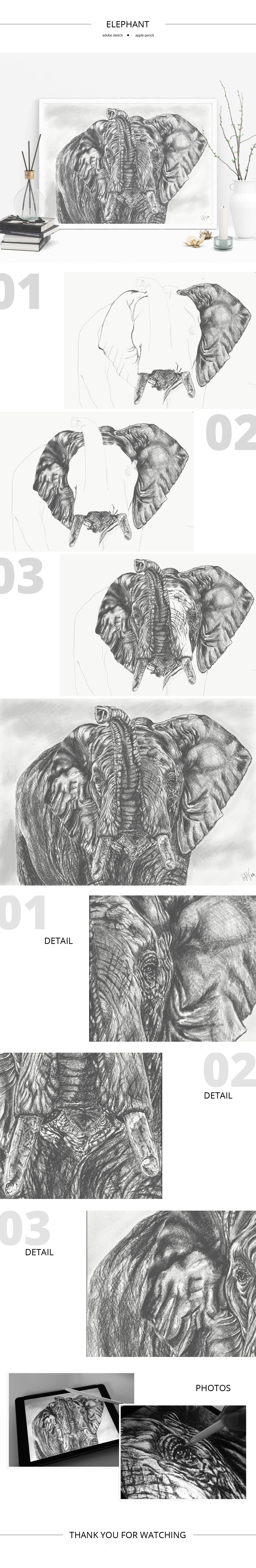 Elephant sketch by Lifety