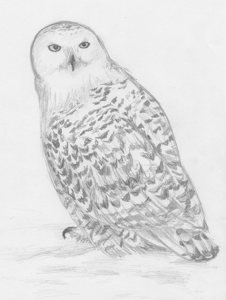the harry potter owl by iiduh on deviantart