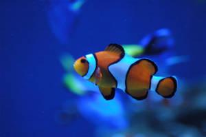 Mr. Fish by redwiltingroses