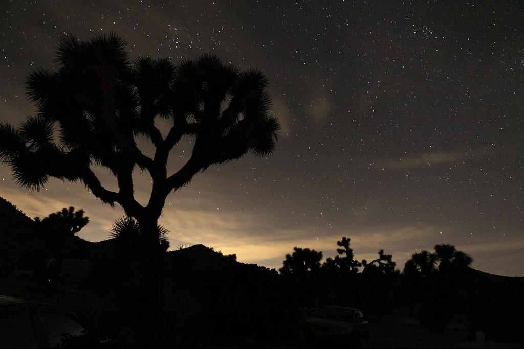 Joshua Tree and Stars by jorobins