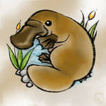 Platypus by JennyBunte