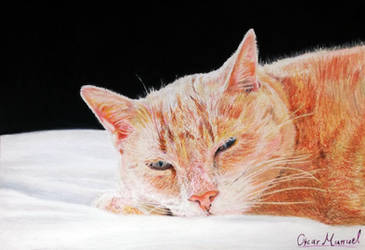 Sweet Punka (Colored pencil drawing) by Oscar-Manuel