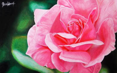 Happy Rose. (Colored pencil drawing)