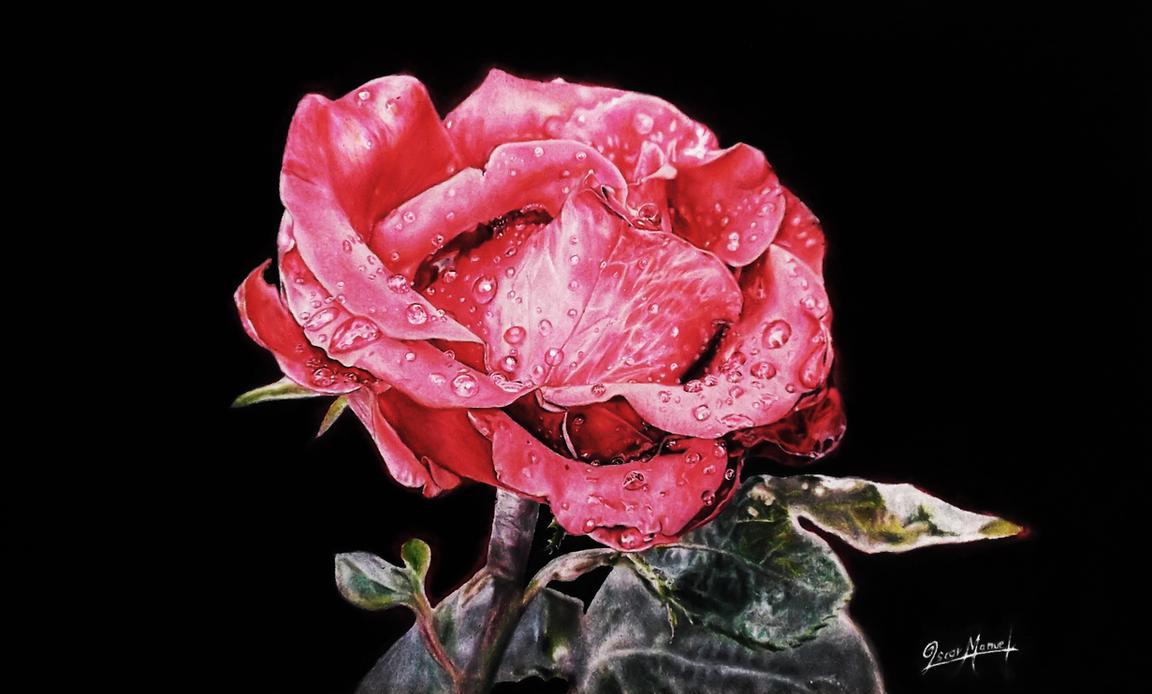 Rose. (Mixed media) by Oscar-Manuel