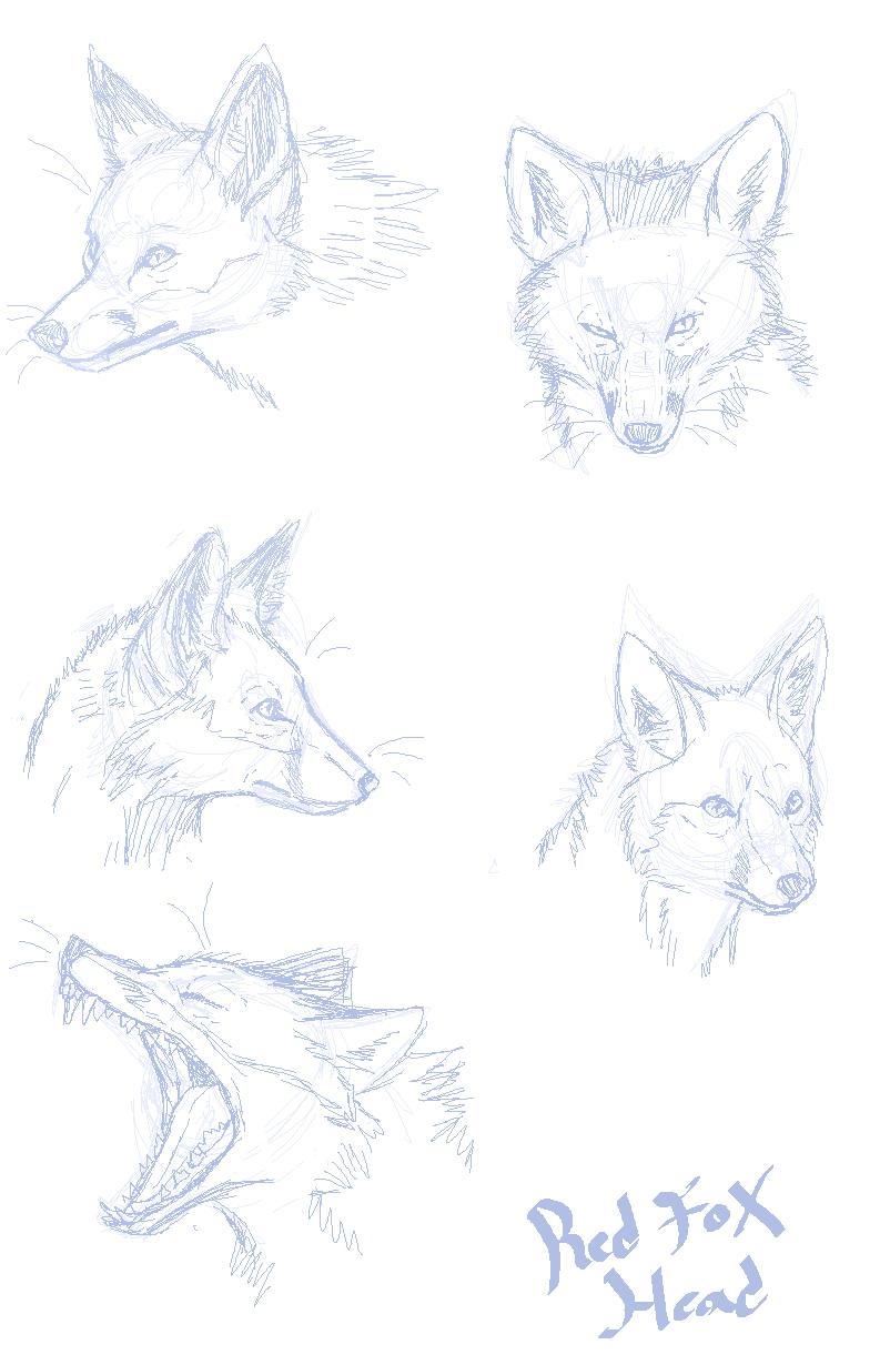 Fox Anatomy For Artists Intellego