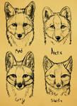 Summer North America Fox faces