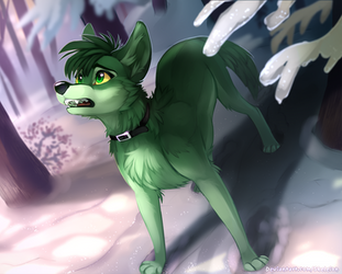 Green Coyote Redraw 2019