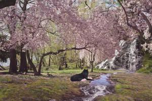 Sakura || SS by Adarhi