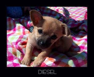Diesel by almostAMAZING