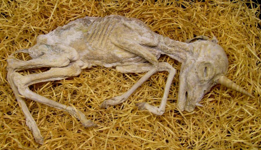mummified by iRainbow-Unicorn on DeviantArt