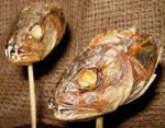 Rare Peruvian Vampire Fish 3