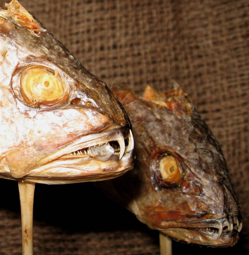 Rare peruvian vampire fish 2 by dethcheez on deviantart for Vampire fish for sale