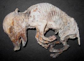 Mummified 6 Leg Freak Pig Gaff by DETHCHEEZ