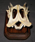 Unknown Mystery Skull 1
