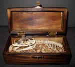 Baby Dragon Skeleton Gaff 1