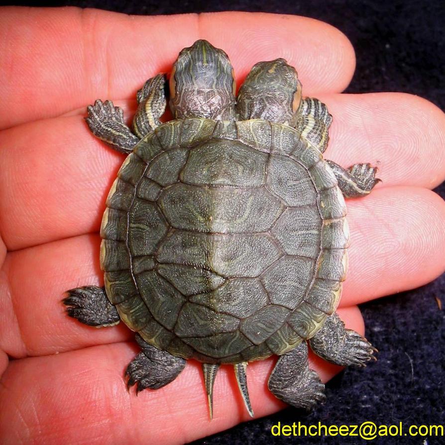 Freak Twin Turtle Top by DETHCHEEZ