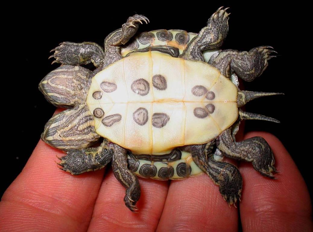 Freak Twin Turtle Bottom by DETHCHEEZ