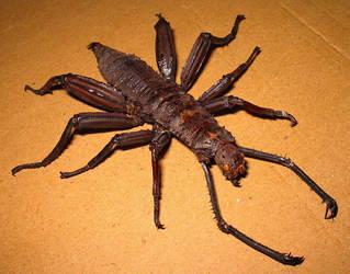 Mutant Freak Bug 1 by DETHCHEEZ
