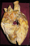 Mummified Vampire Heart 2