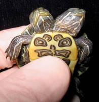 Freak Two Headed Turtle by DETHCHEEZ