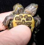 Freak Two Headed Turtle