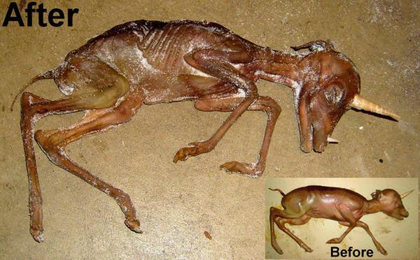 DeviantArt: More Like Mummified Baby Unicorn Gaff 1 by DETHCHEEZ