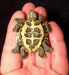 8 Legged Deformed Turtle 2