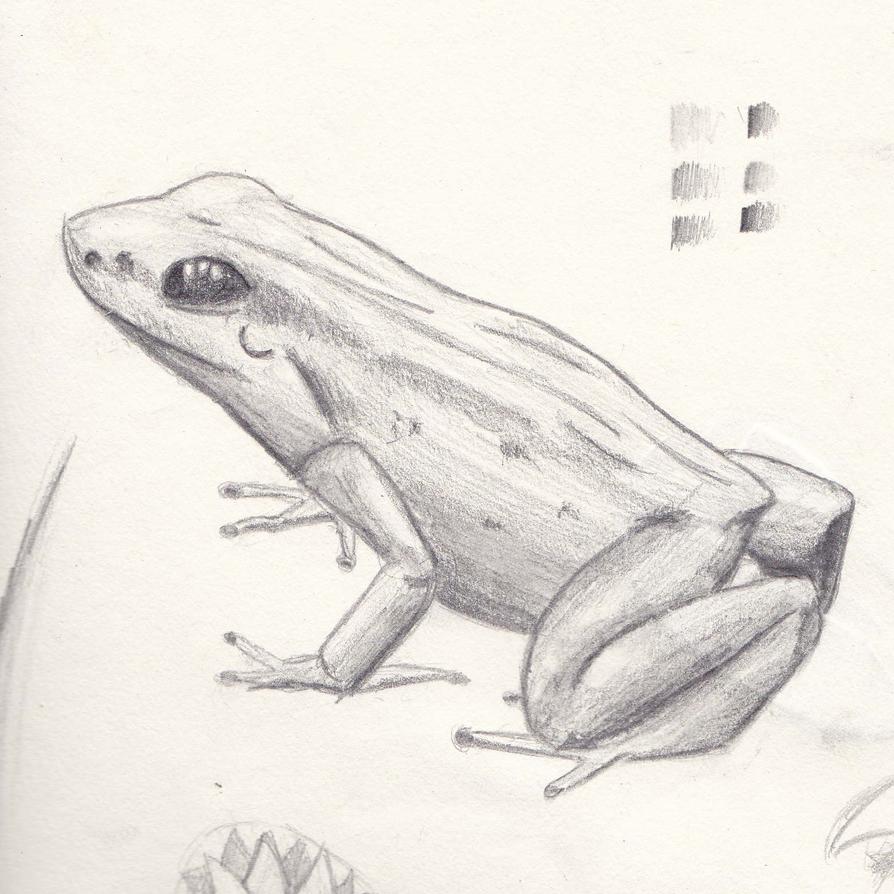Frog by Carptalk369