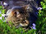 FlowerChild Kaht