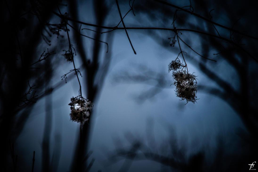 Late Spring Evening 02 by ferobanjo