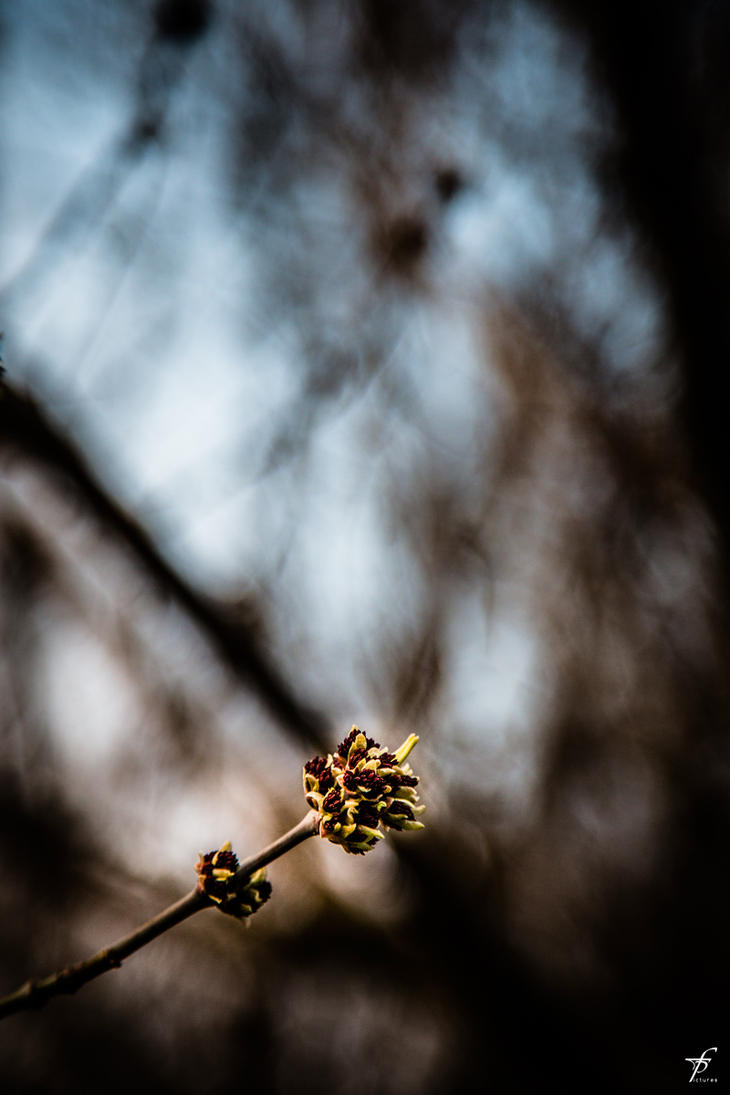 Late Spring Evening 03 by ferobanjo