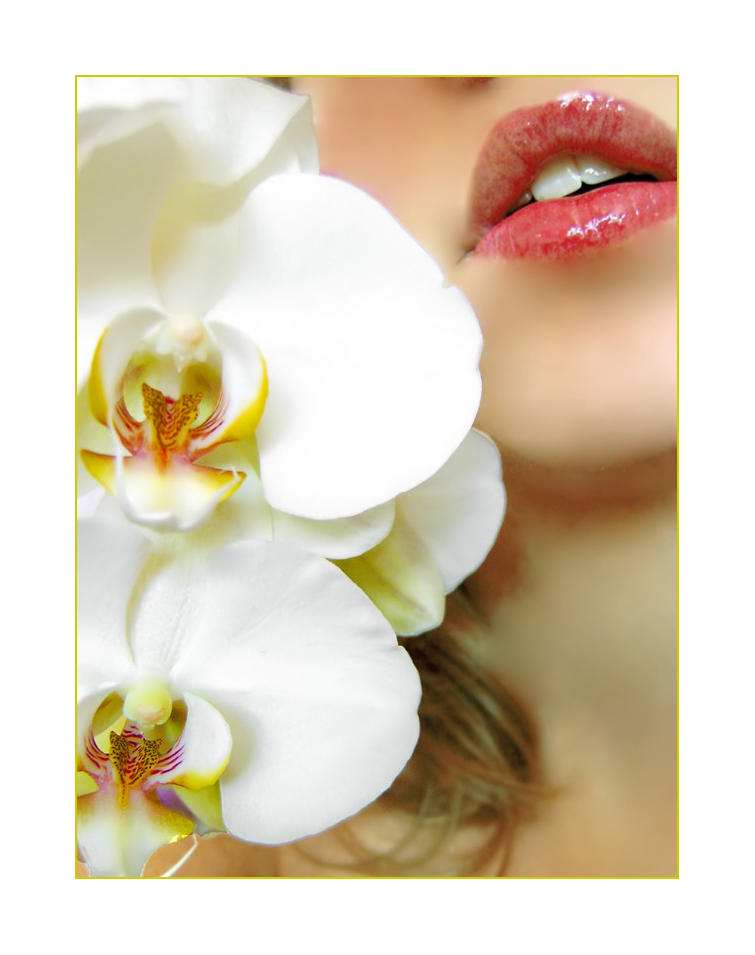 Persephone_Phalaenopsis_by_Ladyrachel