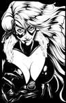 black cat  --