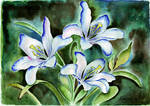 259 Lilies by YourFavoriteRussian