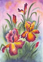 840 Irises by YourFavoriteRussian