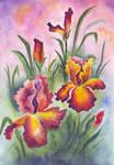 840 Irises