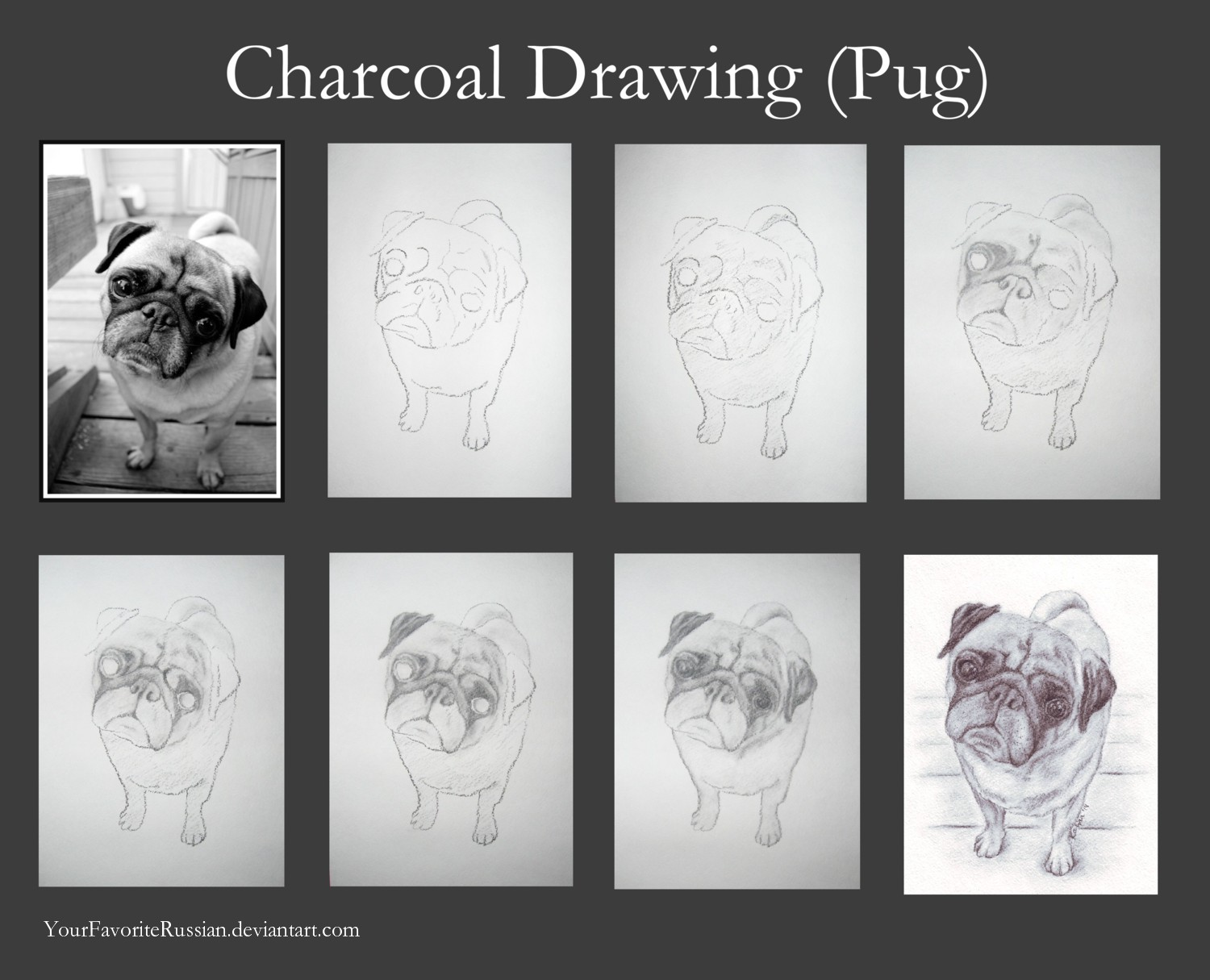 Charcoal drawing tutorial pug by yourfavoriterussian on deviantart